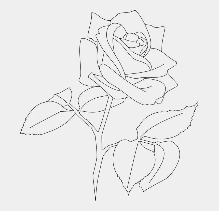 flower line drawing clip art free, Cartoons - Art,symmetry,monochrome Photography - White Rose Outline Png