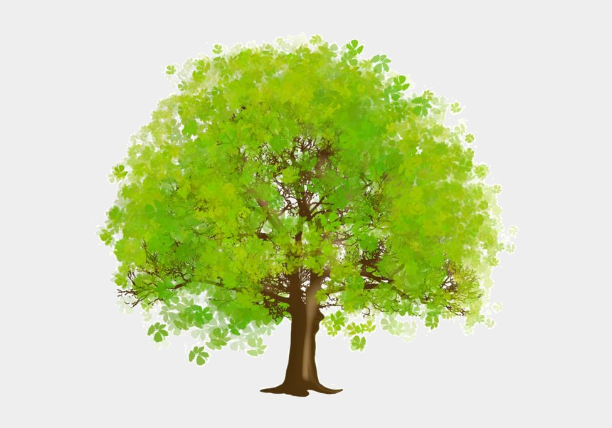 family tree clipart, Cartoons - Arbre Tubes Png Ief Pinterest Arbretubespng Ⓒ - Green Trees Clipart