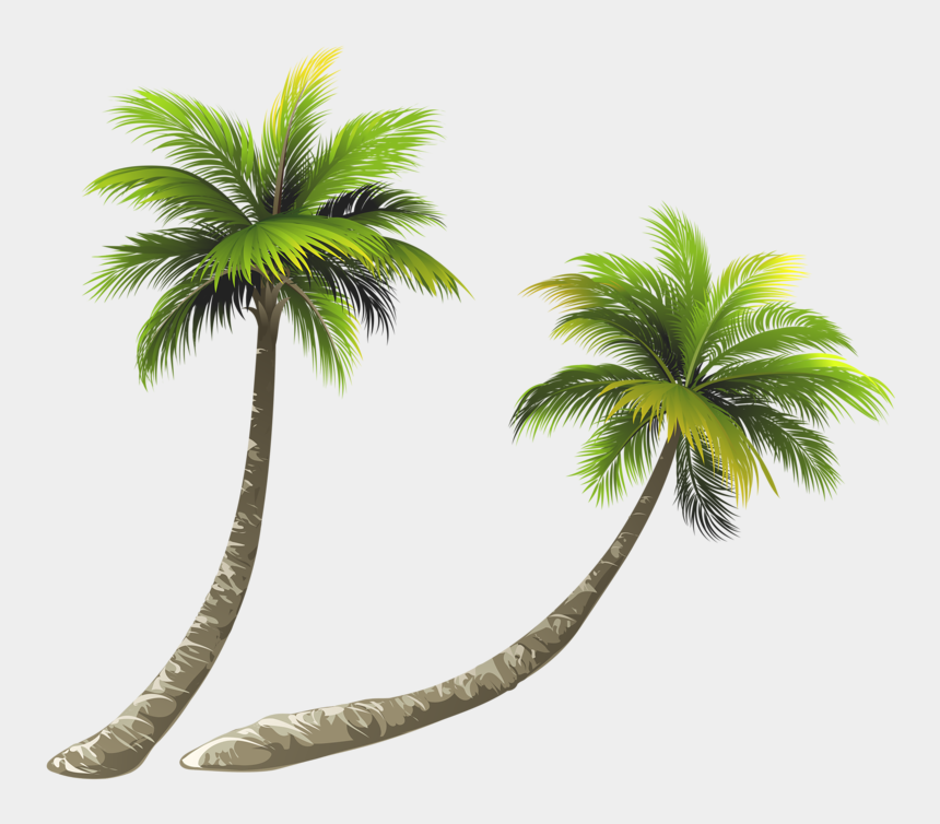 coconut tree clipart, Cartoons - Arecaceae Coconut Royalty-free Illustration - Coconut Tree Free Png