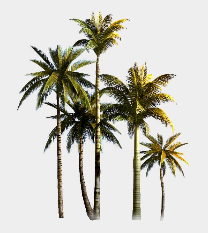 coconut tree clipart, Cartoons - Coconut Grove Tree Euclidean Vector Palm Asian Clipart - Coconut Trees Png Format