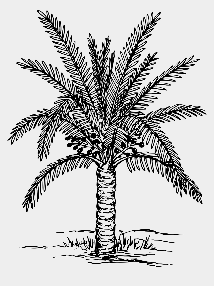 dating clip art, Cartoons - Palm Clipart Black And White