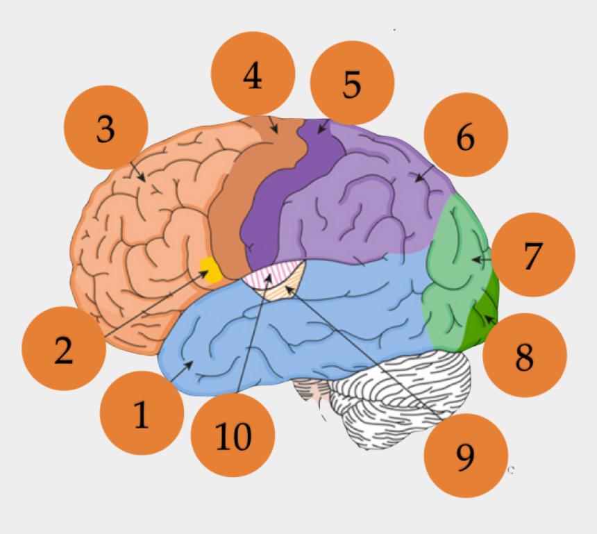 psychologist clipart, Cartoons - Psychology Clipart Brain Surgeon - Illustration