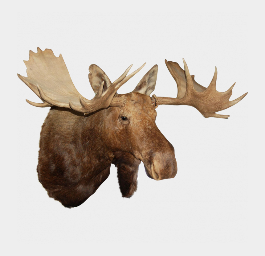 theodore roosevelt clipart, Cartoons - Moose Head Png - Moose Head Transparent Background