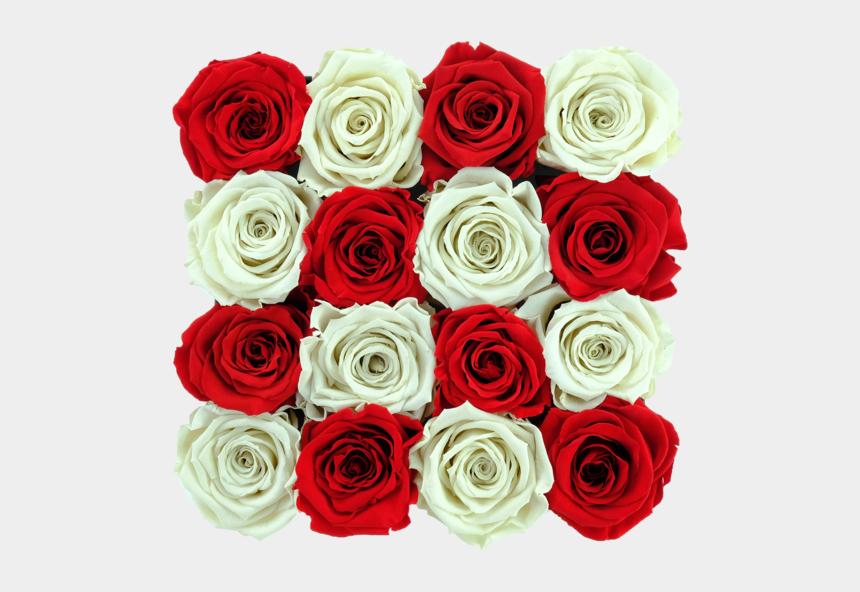 long stemmed rose clip art, Cartoons - Corner Detector
