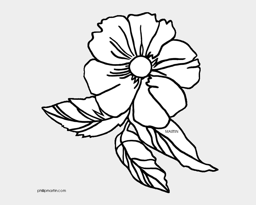wild rose clip art, Cartoons - 28 Collection Of Cherokee Rose Drawing - Drawing Georgia State Flower