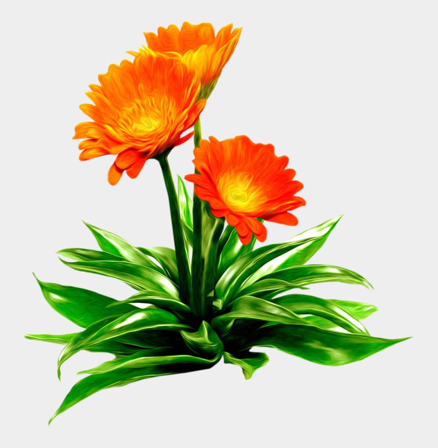 marigolds clipart, Cartoons - Анимация Летние Цветы На Прозрачном Фоне - Клипарт Цветы На Прозрачном Фоне