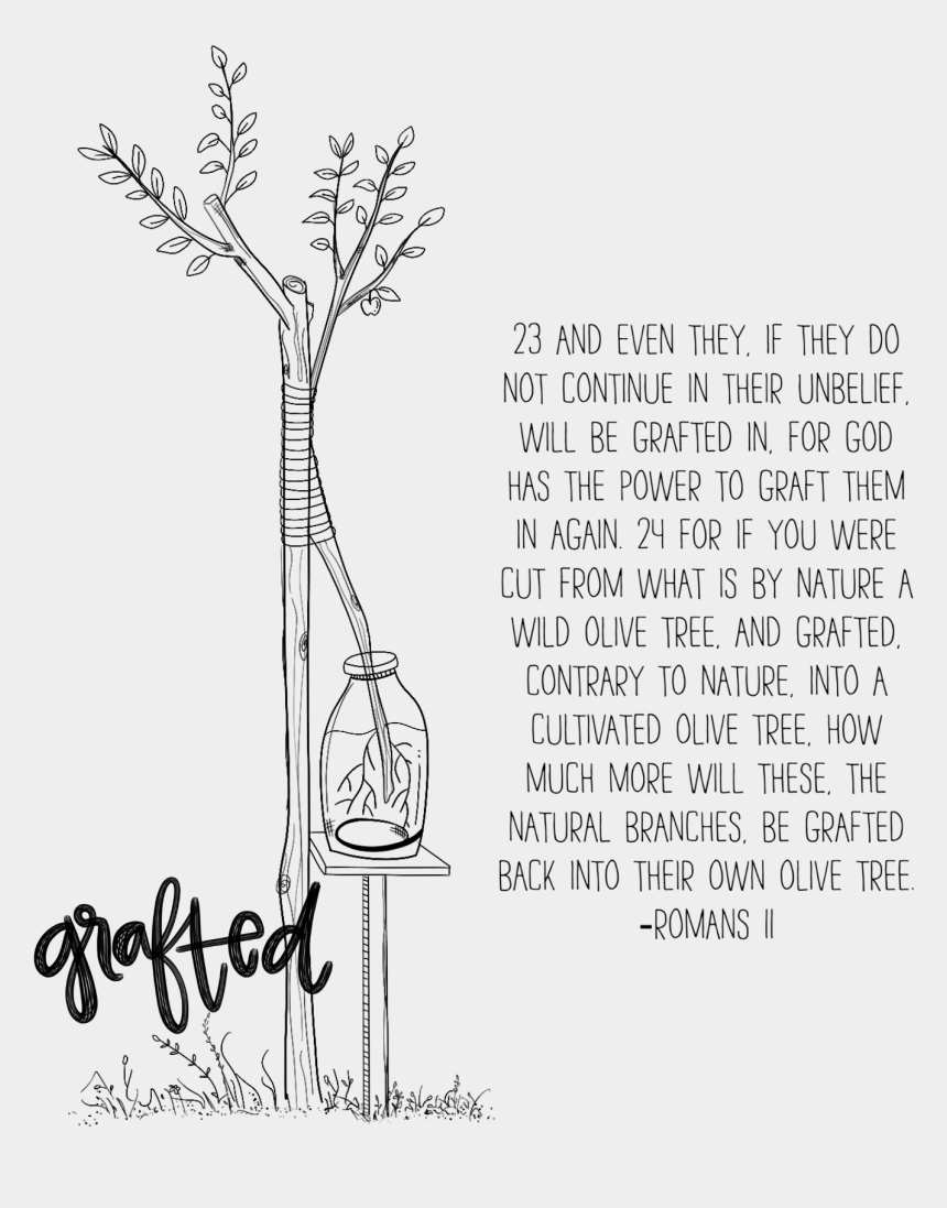 olive tree clipart black and white, Cartoons - Wild Olive Tree Grafted In Cartoon , Png Download - Wild Olive Tree Grafted In Cartoon