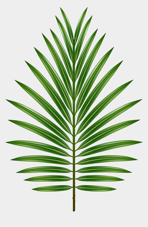 palm fronds clip art, Cartoons - Palm Leaf Transparent - Palm Tree Png Leaves