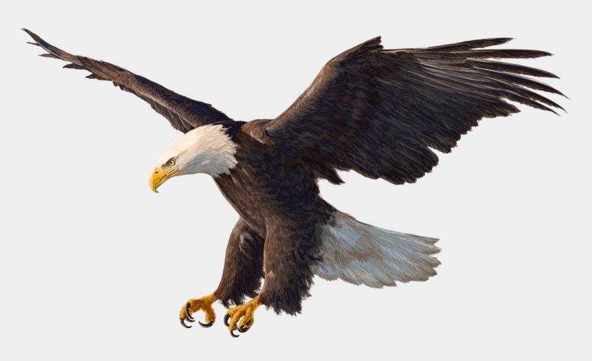 bald eagle clip art free, Cartoons - Bald Eagle Drawing - Eagle Png