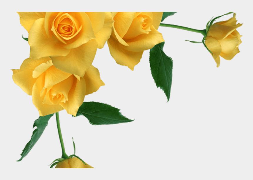 vintage flowers clipart, Cartoons - Vintage Rose Border Corner Transparent - Yellow Roses Transparent Background