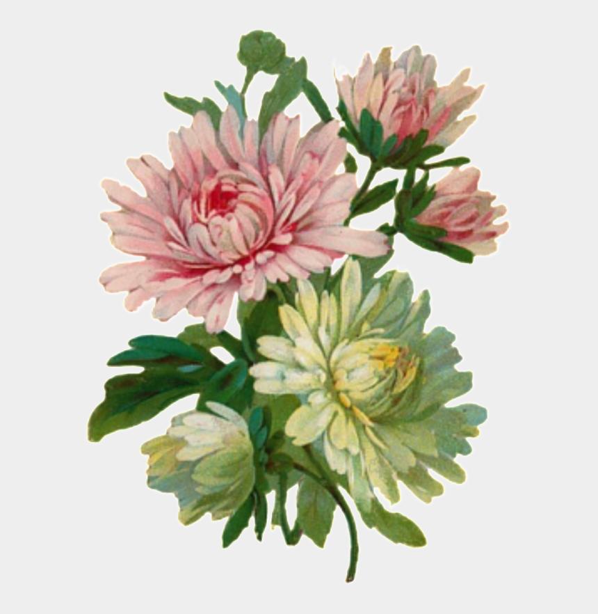vintage flowers clipart, Cartoons - Svg Transparent Stock Cartoon Hand - Vintage Chrysanthemum Flower Art