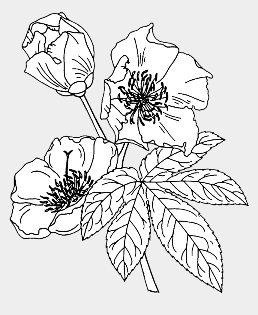 flowers clip art outline, Cartoons - Crafting With Jack Flower Outline, Floral Drawing, - White Flower Outline Png