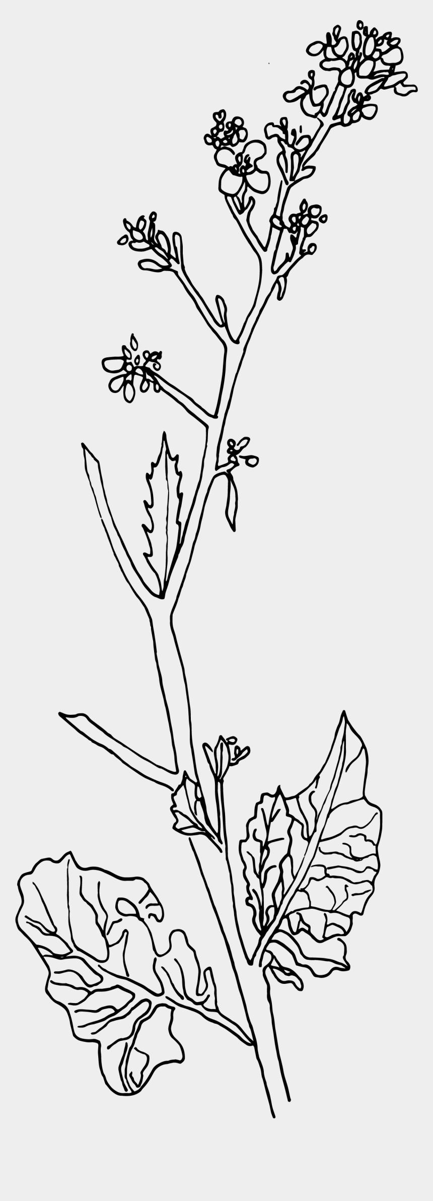 mustard tree clip art, Cartoons - Mustard Plant Sketch