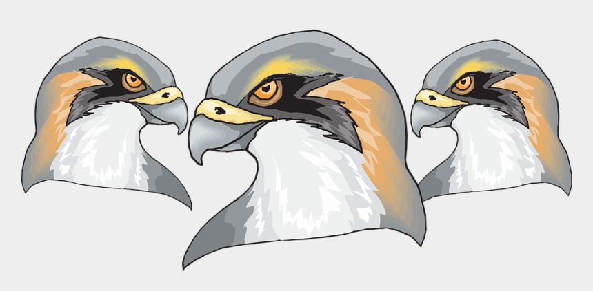 falcon head clip art, Cartoons - Bird, Falcon, Predator, Beak, Head, Nature, Raptor - Hawk Head Png