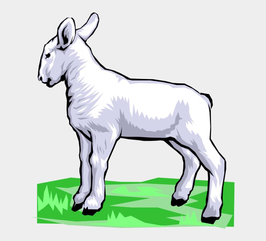 baby lamb clip art, Cartoons - Vector Illustration Of Newborn Baby Lamb Sheep Standing
