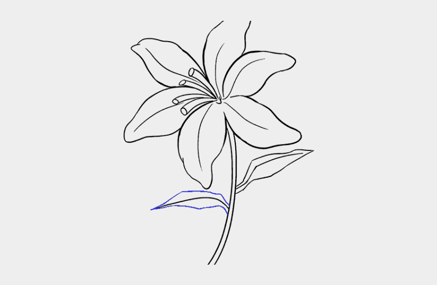easter lilies clipart, Cartoons - Drawn Lily Easter Lily - Drawing