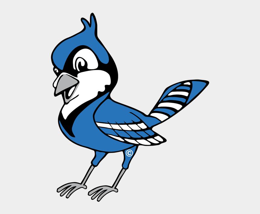 blue jay clipart, Cartoons - Blue Jay Logo - Transparent Blue Jay Clipart
