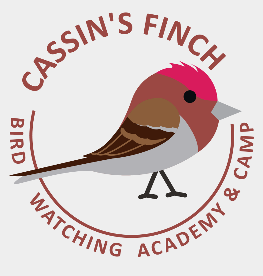 finch clip art, Cartoons - Cassin's Finch Picture - Old World Flycatcher
