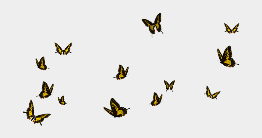 butterfly flying clipart, Cartoons - Butterflies Flying Transparent Png Clipart Free Download - Flying Butterflies Transparent Background