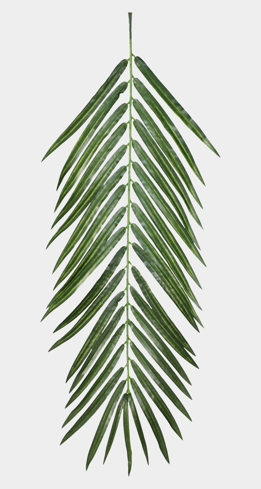 sand clipart texture, Cartoons - Plant Opacity Texture Mapping Leaf - Palm Tree Leaf Texture
