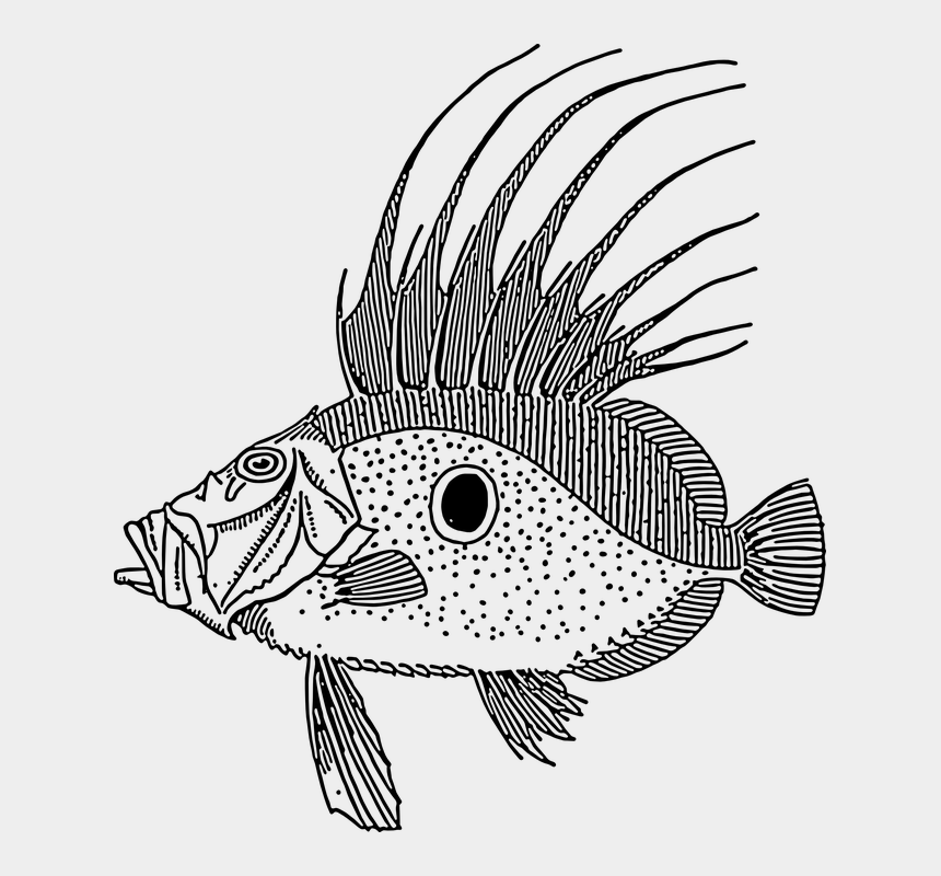 spike clipart, Cartoons - Large Fish Swimming Scales Spike Spot Species - Fish Illustration Public Domain