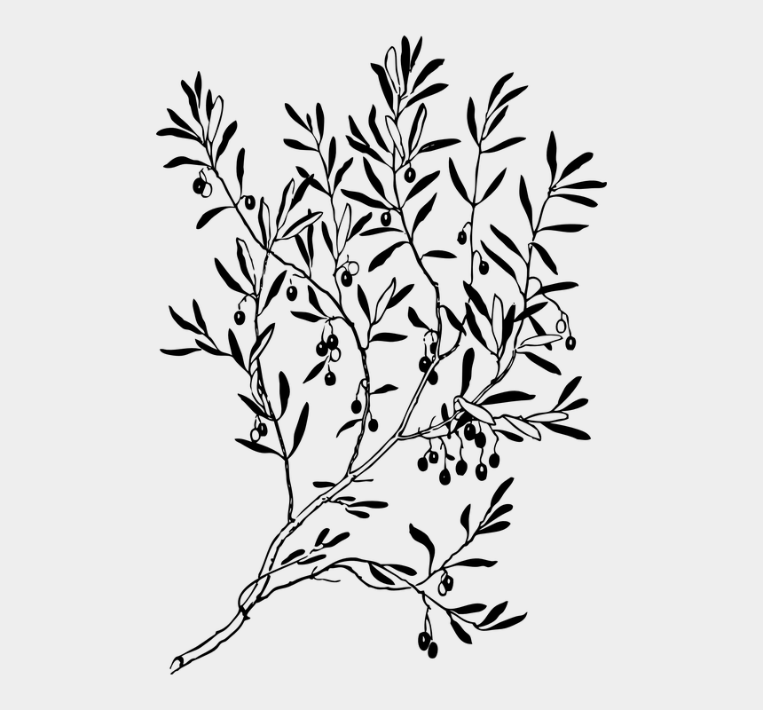 shampoo clipart black and white, Cartoons - Branches, Leaves, Plant, Tree, Stems - Olive Tree Black And White