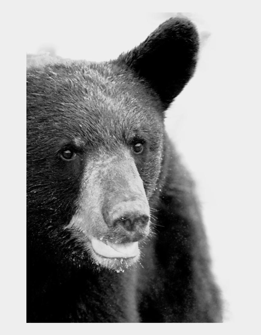small black bear clipart, Cartoons - Creative Agency Lancashire - American Black Bear
