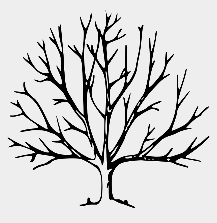 tree branch clipart svg, Cartoons - Tree Drawing With Branches Clipart , Png Download - Tree With No Leaves Drawing