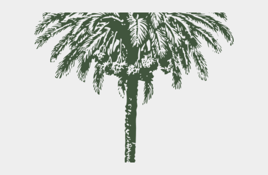 clipart drawing of palm tree, Cartoons - Date Palm Clipart Arabian - Date Palm Black And White