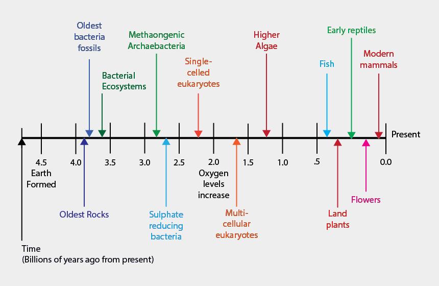 eukaryotic cells clipart, Cartoons - Diagram