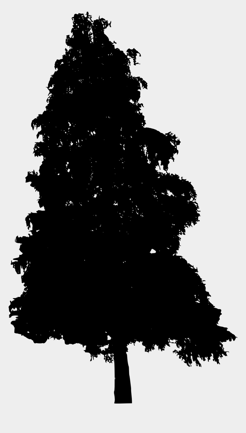 pine tree clipart transparent background, Cartoons - Pine