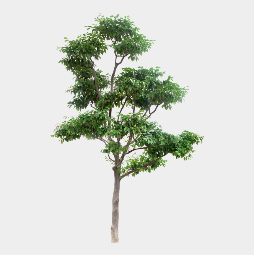 Arbre Png Download High Resolution Trees Png High Resolution Trees Png Cliparts Cartoons Jing Fm
