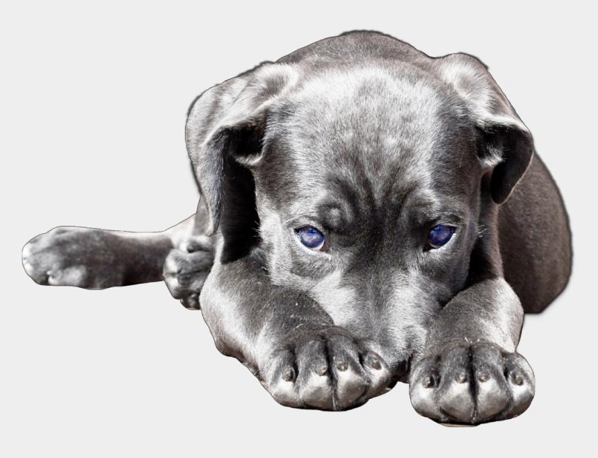labrador head clipart, Cartoons - #dog #cute #puppy #lab #labrador #labradorretriever - Dog