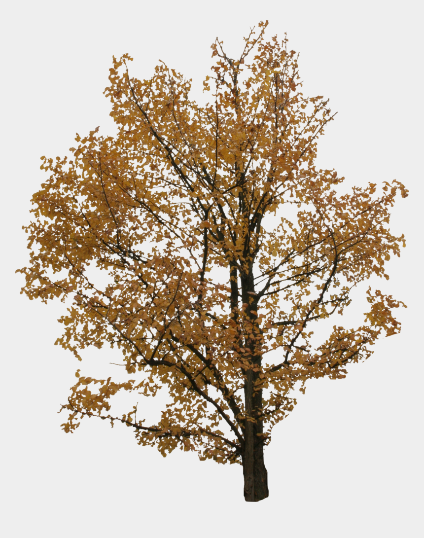 autumn tree trunk clipart, Cartoons - 2d Trees, Autumn - Tree Cut Out Png