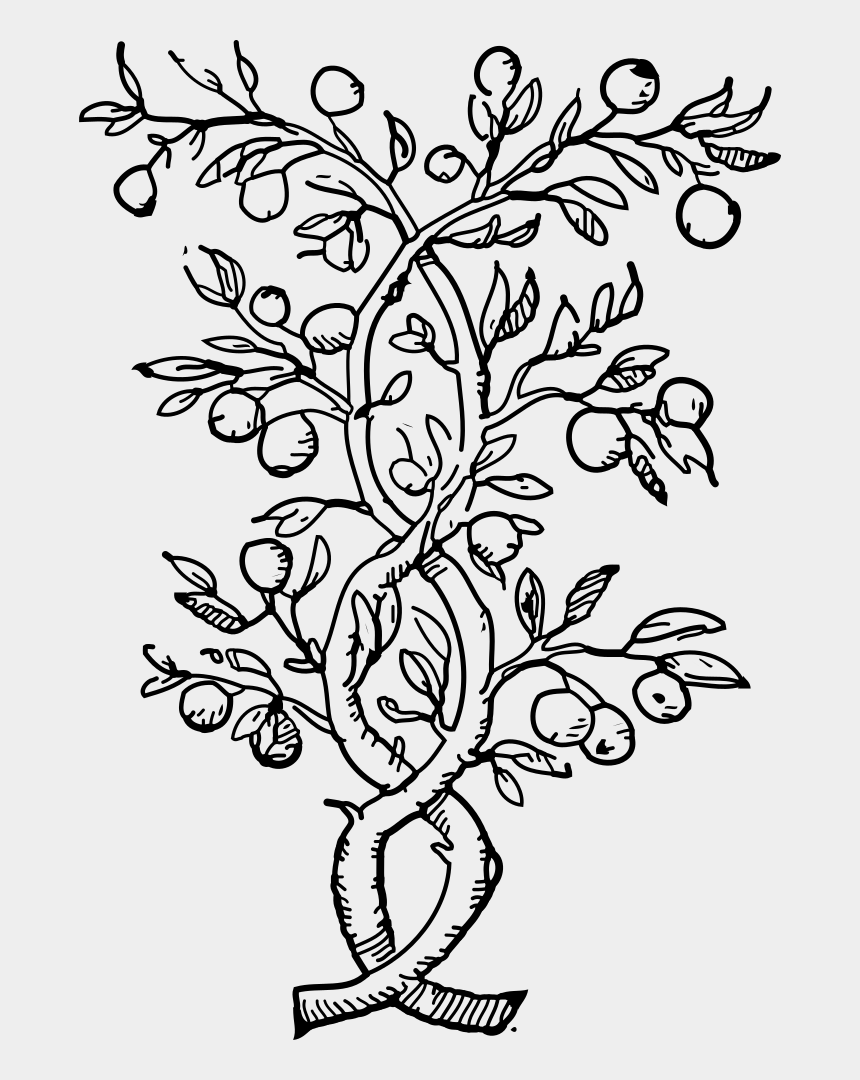 olive branches clipart, Cartoons - Coloring Book Fruit Tree Olive Colouring Pages - Fruit Tree Black And White