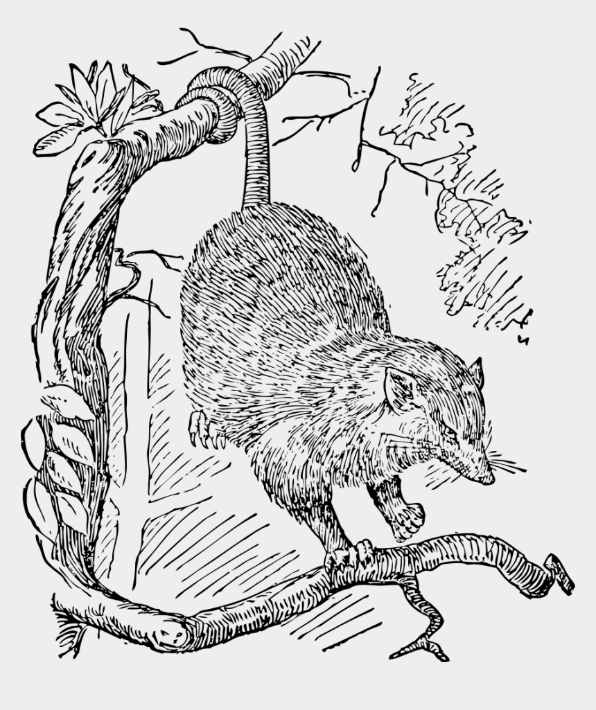 Images about possums on cartoon and clipart in 2020   Cartoon drawings,  Possum image, Drawings