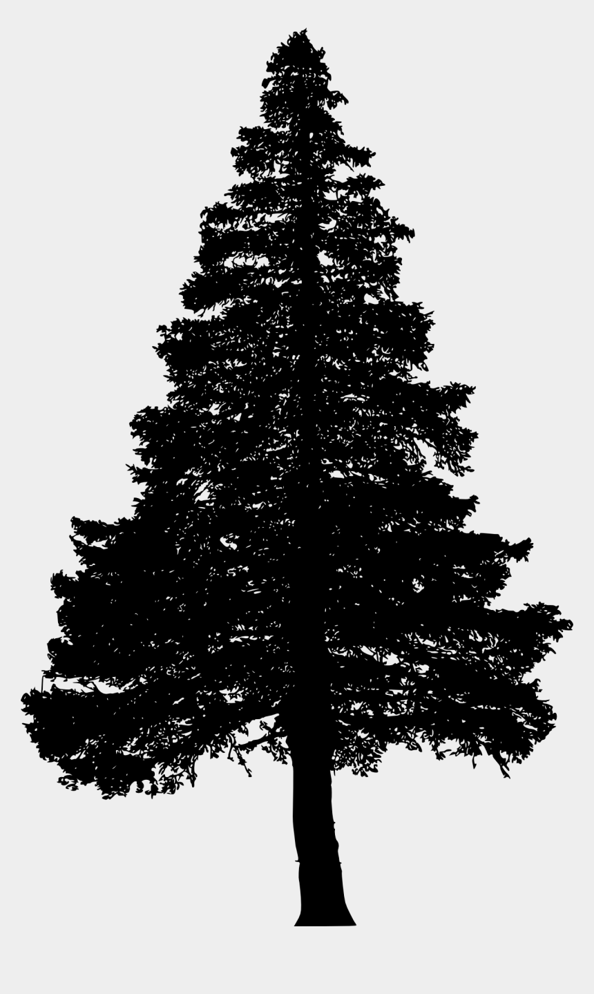 evergreen tree clipart black and white, Cartoons - White Pine Tree White Silhouette Png - Pine Tree Silhouette Png