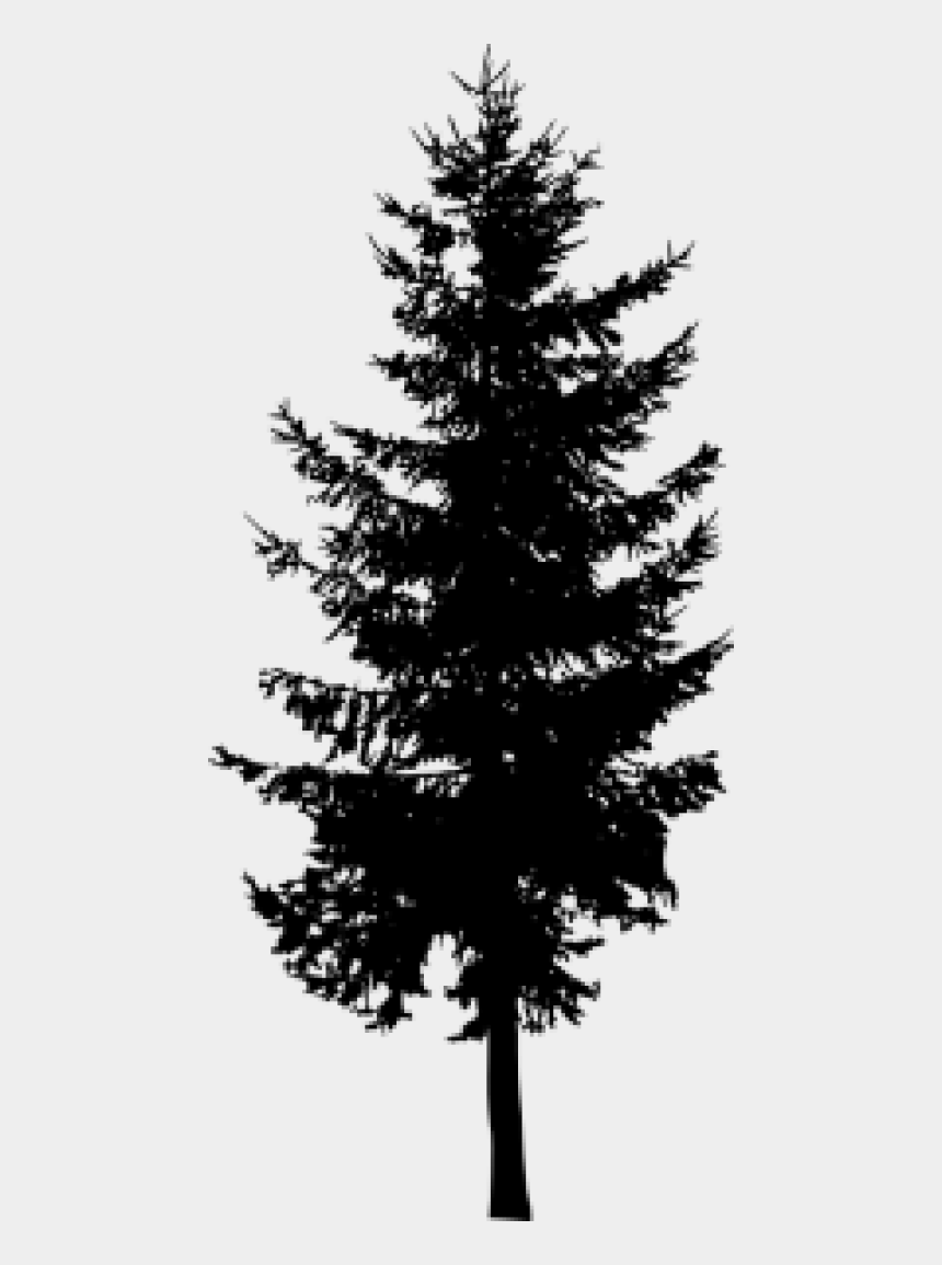 evergreen tree clipart black and white, Cartoons - Png Pine Tree - Silhouette Pine Tree Png