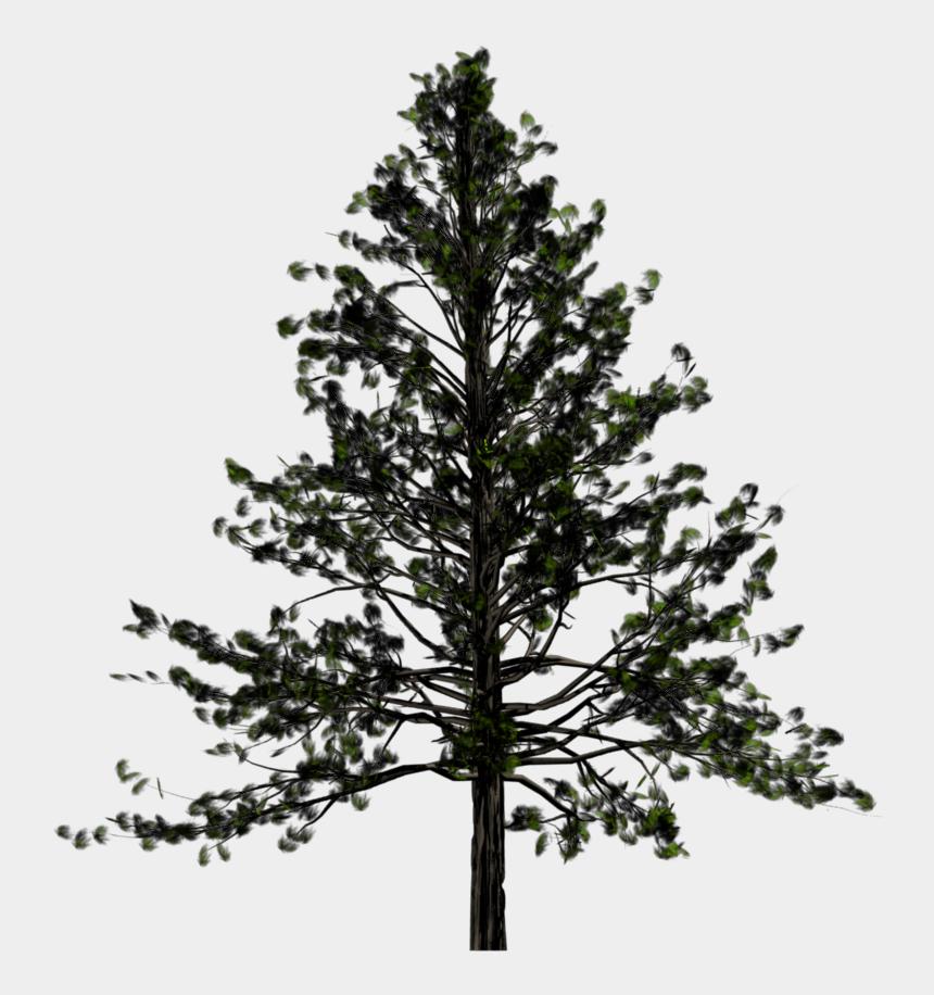 Australian Christmas Tree Pine.Australian Native Trees Png Pine Tree Transparent Png