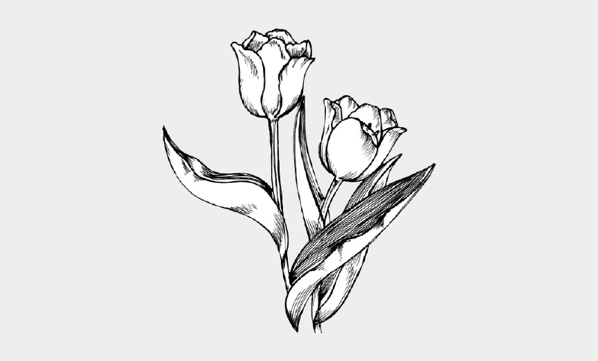 tulips clipart, Cartoons - Petal Drawing Tulip - Tulip Flower Clipart Black And White