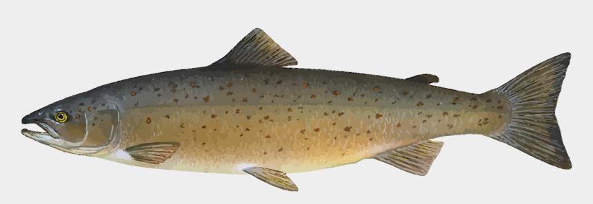 salmon clipart, Cartoons - Free To Use Public Domain Animals Clip Art - Atlantic Salmon Clipart
