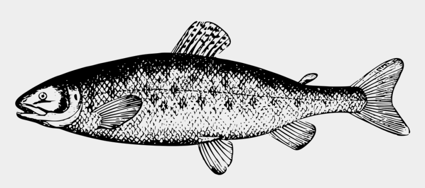 salmon clipart, Cartoons - Fintan, The Salmon Of Knowledge - Salmon Clipart Black And White