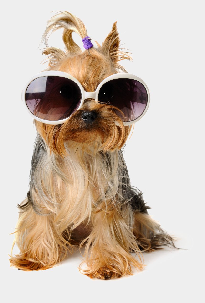 sitting clipart, Cartoons - Shaggy Sitting Pet Greeting Dog Birthday Puppy - Dog With Sunglasses Transparent