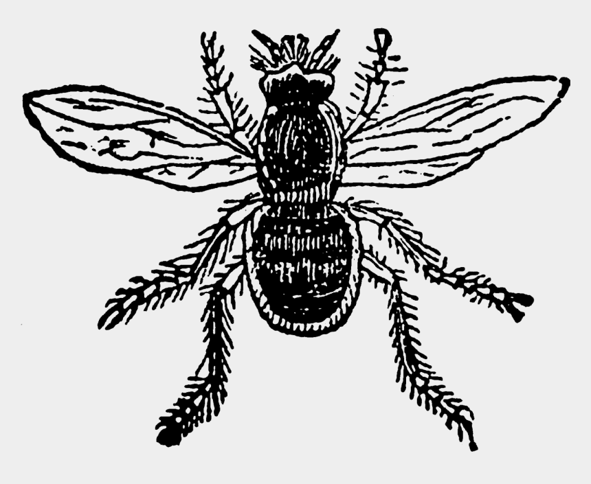 flies clipart, Cartoons - Digital Stamp Design Printable Insect Bee Fly Ⓒ - Net-winged Insects