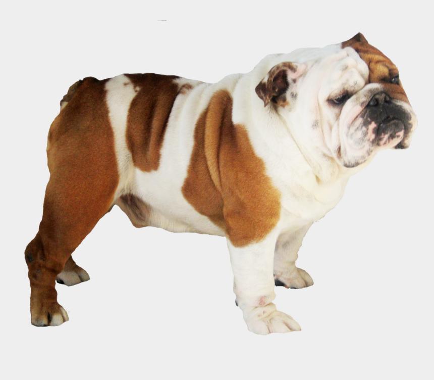 pug face clipart, Cartoons - Bulldog Free Png Pluspng - Transparent French Bulldog Png