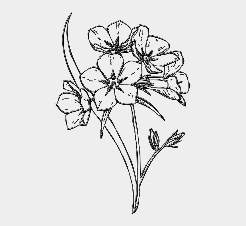 magnolia clipart black and white, Cartoons - Flowers, Bunch, Buds, Floral, Blossom - Flower Bunch Black And White