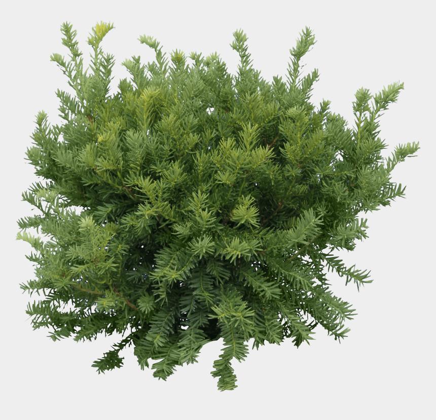redwood tree clipart, Cartoons - Bush Fir Tree - Pine Tree