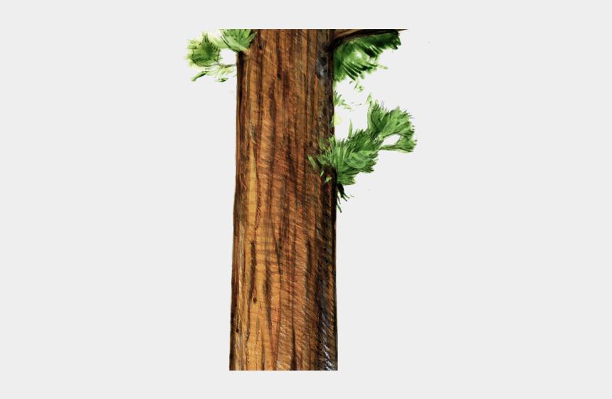redwood tree clipart, Cartoons - Redwood