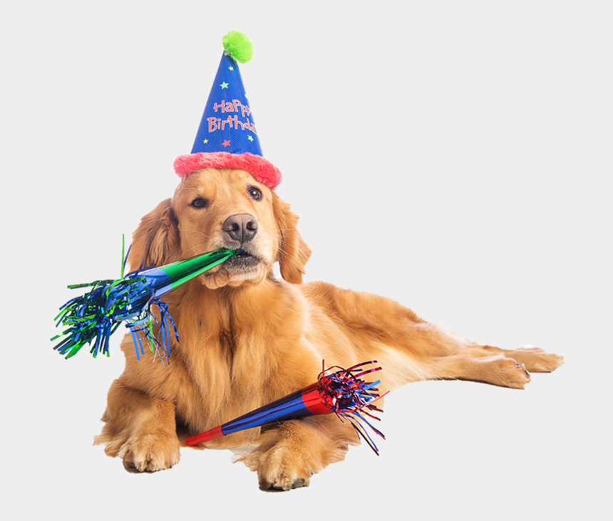 party hats clipart, Cartoons - Birthday Dog Png Pluspng - Happy Birthday Dog