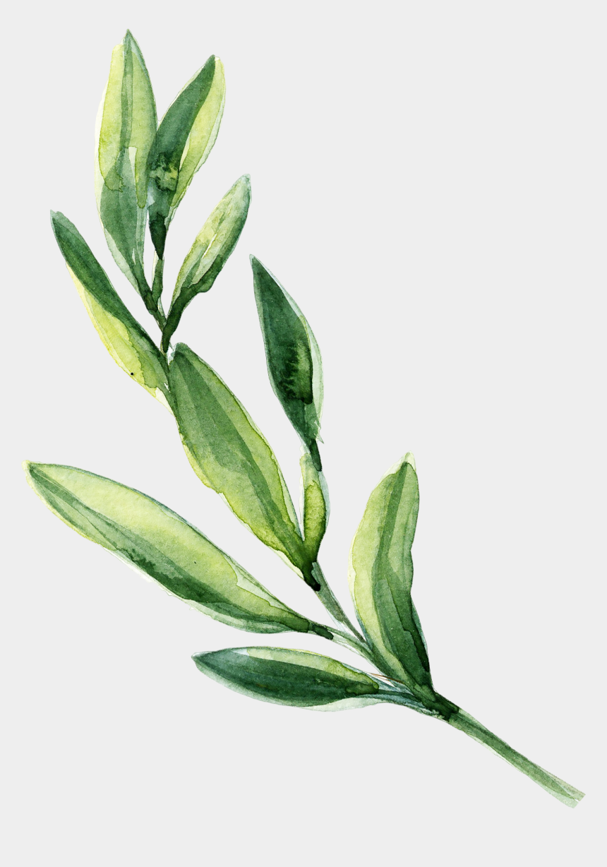 sage clipart, Cartoons - 0℃素材23 - Transparent Green Watercolor Leaves